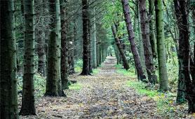 Ayudas Innovación Agroforestas. En Boletín de Noticias para Emprendedores de la Fundación CEL - Iniciativas por Lugo