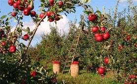 Ayudas productos agrarios en Boletín de Noticias para Emprendedores de la Fundación CEL - Iniciativas por Lugo