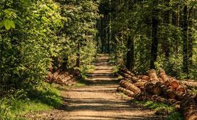 Premio Innovación Forestal. Boletín de Noticias para Emprendedores de la Fundación CEL