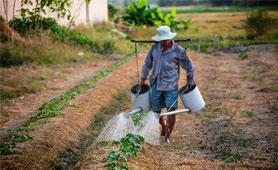 Ayudas creación empresas agricultores